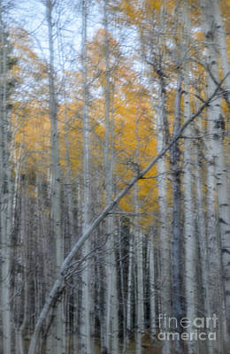 Photograph - Aspens II by Tamara Becker