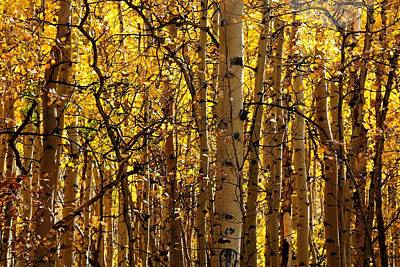Photograph - Aspens In Autumn by Marilyn Burton