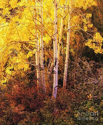Aspens In Autumn Art Print by Nancy Marie Ricketts