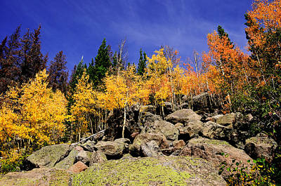 Photograph - Aspens In Fall by Bonnie Fink