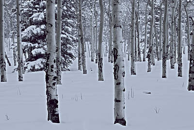 Art Print featuring the photograph Aspens In The Snow by Kristal Kraft