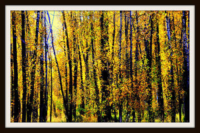 Aspens In Yellowstone National Park Art Print