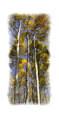 Photograph - Aspens by Judy Deist