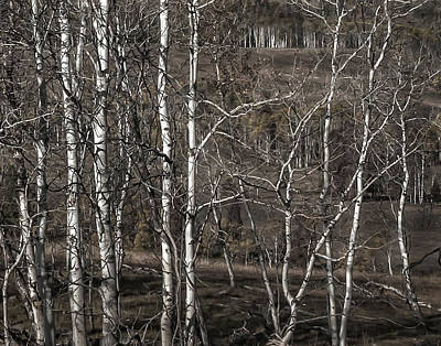 Winter And Autumn Landscape Photograph - Aspens  by Marion McCristall