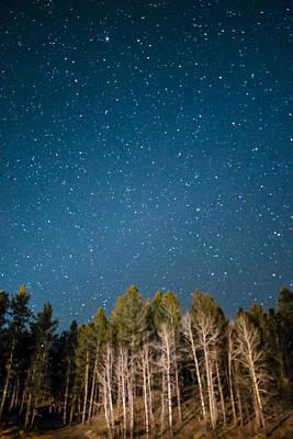 Photograph - Aspens Reaching For The Stars by Dakota Light Photography By Dakota