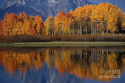 Photograph - Aspens Reflections Snake River Grand Tetons National Park Wyoming by Dave Welling