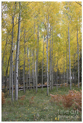 Art Print featuring the photograph Aspen's Yellow Glow by Ruth Jolly