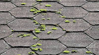 Photograph - Asphalt Shingles by Ethna Gillespie
