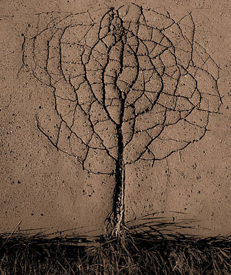 Asphalt Tree Art Print