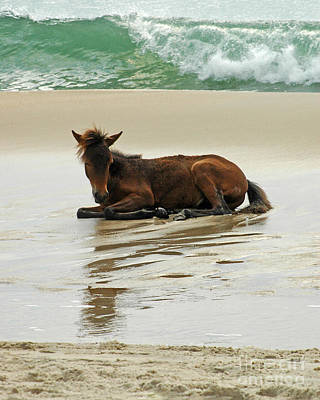 Assateague Foal Art Print by Olivia Hardwicke