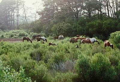 Assateague Herd Art Print by Joann Renner
