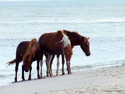 Photograph - Assateague Trio by Kimmary MacLean