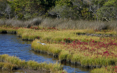 Photograph - Asseteague Island Marsh by Greg Vizzi