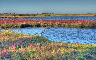 Photograph - Asseteague Island Salt Marsh by Greg Vizzi