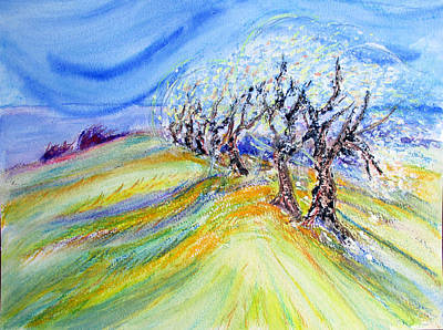 Assisi Wind Original