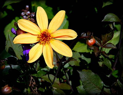 Photograph - Assorted Flower 006 by Larry Ward