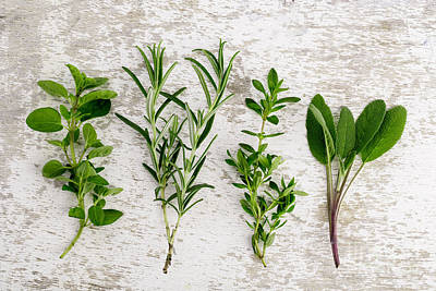 Four Photograph - Assorted Fresh Herbs by Nailia Schwarz