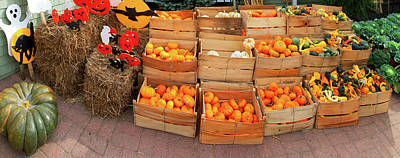 Farm Stand Photograph - Assorted Gourds And Small Pumpkins by Panoramic Images