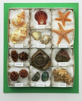 Assorted Sea Shells Displayed In A Tray Art Print by Dorling Kindersley/uig