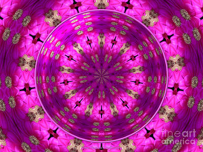 Photograph - Aster Kaleidoscope Under Glass by Rose Santuci-Sofranko