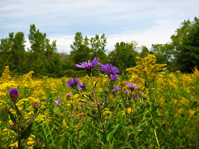 Photograph - Asters And Goldenrod by Shawna Rowe