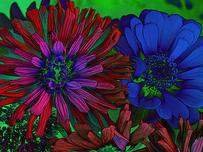 Photograph - Asters by David Pantuso