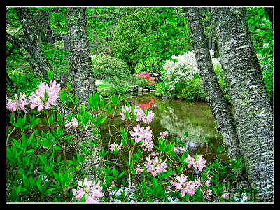 Azaleas Photograph - Asticou Azalea Garden by Edward Fielding