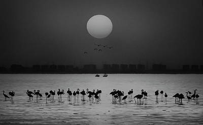 Sea Bird Wall Art - Photograph - At A Glance by Ahmed Thabet