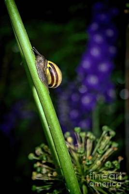 Photograph - At A Snail's Pace by Henry Kowalski