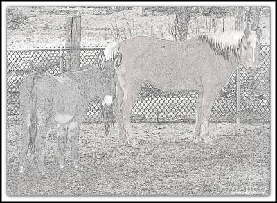 Photograph - At Home On The Farm by Bobbee Rickard