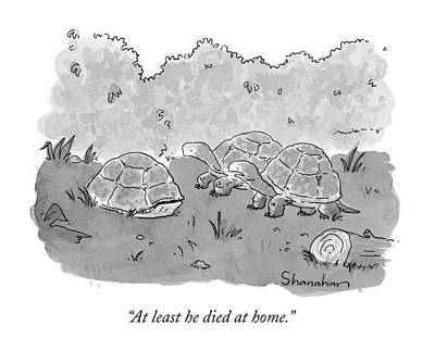 Turtle Drawing - At Least He Died At Home by Danny Shanahan