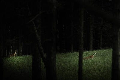 Canaan Valley Photograph - At Play In Darkened Woods by Shane Holsclaw