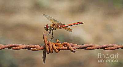 Dragonfly Photograph - At Rest by Gary Wing