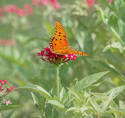 Photograph - At Rest - Gulf Fritillary Butterfly by Kim Hojnacki