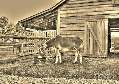 Photograph - At The End Of The Day - Sepia by Kathy Baccari