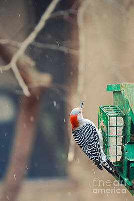 Photograph - At The Feeder 3 by Kay Pickens