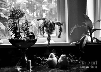 Food Photograph - At The Kitchen Window by Tanya  Searcy