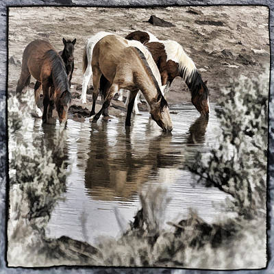Forelock Photograph - At The Watering Hole 1 by Wes and Dotty Weber