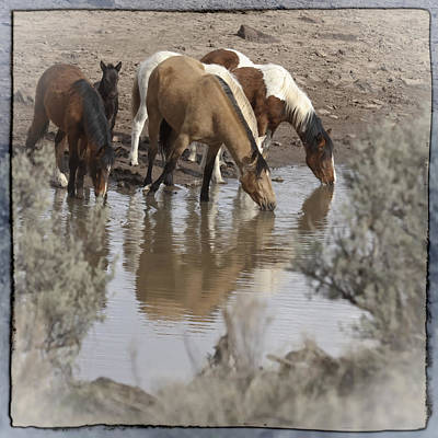 Forelock Photograph - At The Watering Hole by Wes and Dotty Weber