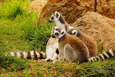 Digital Art - At The Zoo by Nur Roy