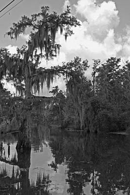 Photograph - Atchafalaya Swamp by Ronald Olivier
