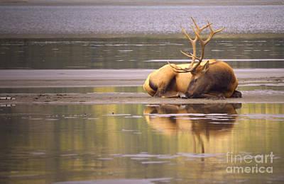 Photograph - Athabasca Daydreams by Tara Turner