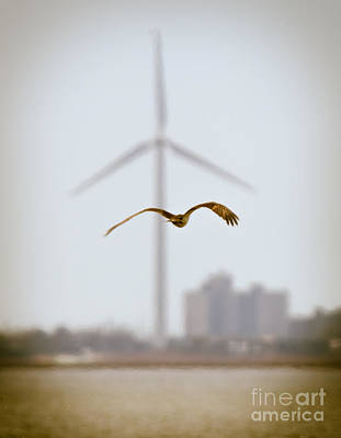 Photograph - Atlantic City Osprey by Ursula Lawrence