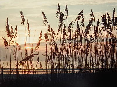 Photograph - Atlantic Coast Sunrise by Belinda Lee