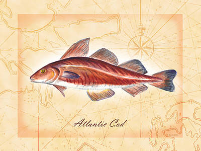 Painting - Atlantic Cod  by Clara Sue Beym
