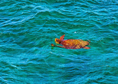 Photograph - Atlantic Green Sea Turtle by John M Bailey
