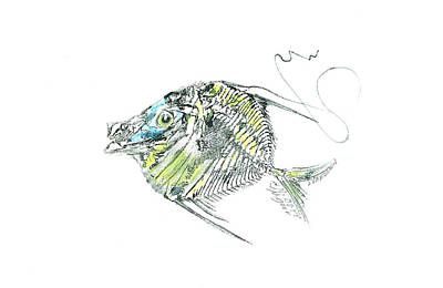 Mixed Media - Atlantic Lookdown Fish Against White Background by Nancy Gorr