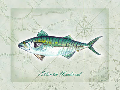 Painting - Atlantic Mackeral by Clara Sue Beym