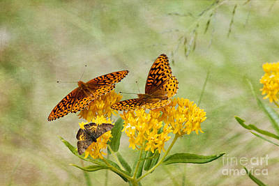 Photograph - Atlantis Fritillaries And Zela Metalmark by Marianne Jensen