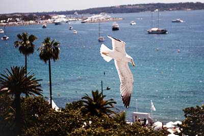 General Photograph - Atmosphere - The 67th Annual Cannes by Francois Durand